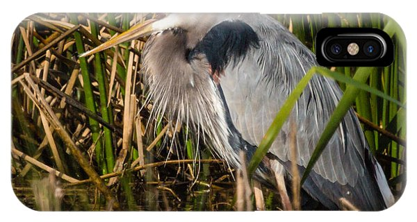 Squaking Blue Heron IPhone Case