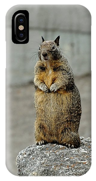Squirrel At Lover's Point  IPhone Case