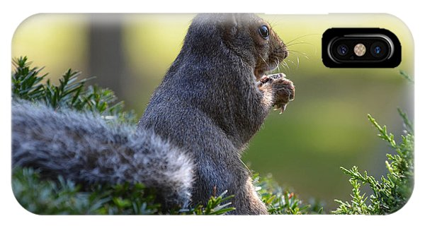 Squirrel IPhone Case