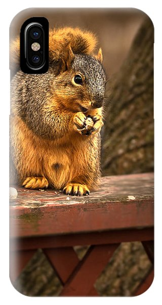Squirrel Eating A Peanut IPhone Case
