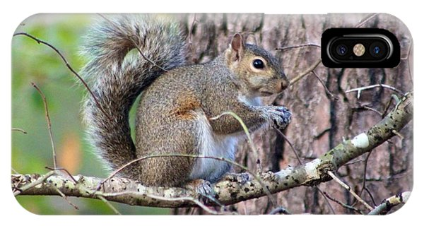 Squirrel In Forest IPhone Case