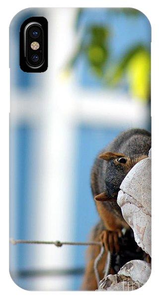 Squirrel In Hiding IPhone Case