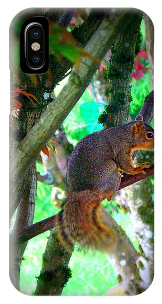 Squirrel In My Tree IPhone Case