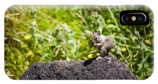 Squirrel Lunch IPhone Case