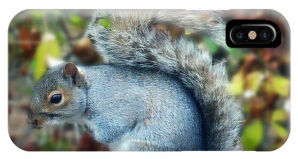Squirrel Series 1 IPhone Case