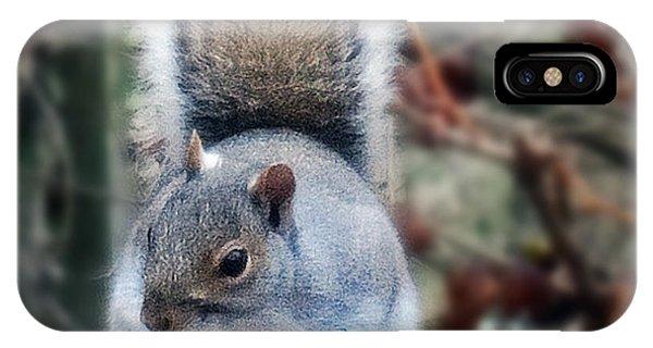 Squirrel Series 2 IPhone Case