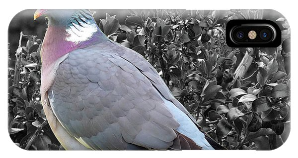 St. Andrews Pigeon IPhone Case