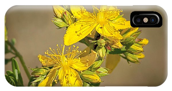 St Johns Wort IPhone Case