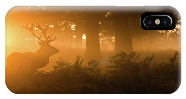 Stag iPhone Case - Stag In The Mist by Stuart Harling