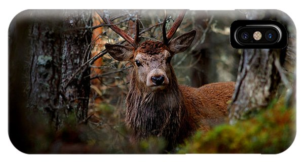 Stag In The Woods IPhone Case