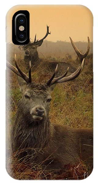 Williams Fine Art Stag Party The Series  IPhone Case