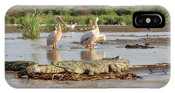 Crocodile iPhone Case - Stalking Crocodile by Tom Norring