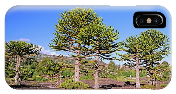Stand Of Monkey Puzzle Trees (araucaria Phone Case by Martin Zwick