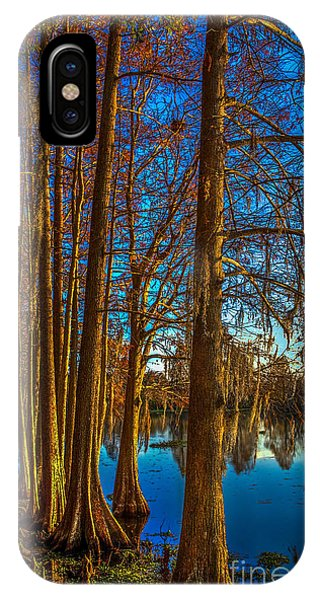 Cypress iPhone Case - Stand Tall by Marvin Spates
