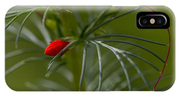 Standing Cypress Bud IPhone Case