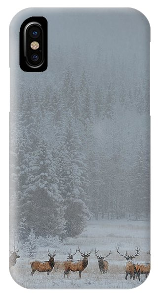 Stag iPhone Case - Standing In Storm by Yun Wang
