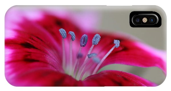 Standing Tall Sweet William IPhone Case