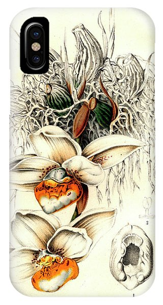 Monocotyledon iPhone Case - Stanhopea Ecornuta Orchid by Collection Abecasis