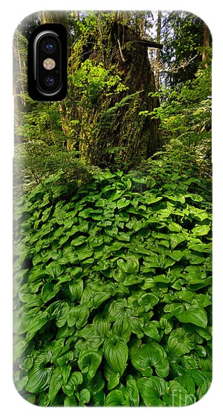 Stanley Park In Spring Time Phone Case by Terry Elniski