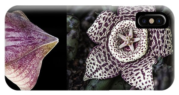 IPhone Case featuring the digital art Stapelia Bud And Blossom by Photographic Art by Russel Ray Photos