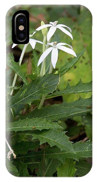 Star Flower (hippobroma Longiflora) IPhone Case