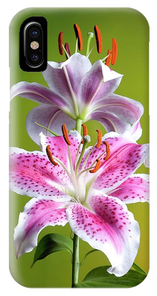 Star Gazer Lily IPhone Case