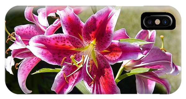 Star Lily In Blazing Color IPhone Case