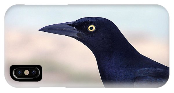 Stare Of The Male Grackle IPhone Case