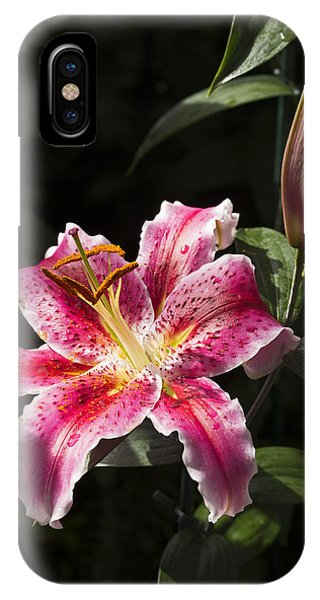 Stargazer Bloom And Bud IPhone Case