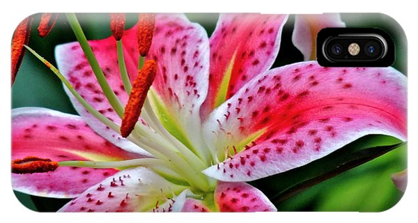 Stargazer Lily IPhone Case