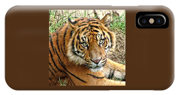 Staring Tiger IPhone Case