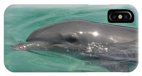 Starlett Dolphin Posing IPhone Case