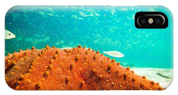 Stars And Fish And Starfish IPhone Case