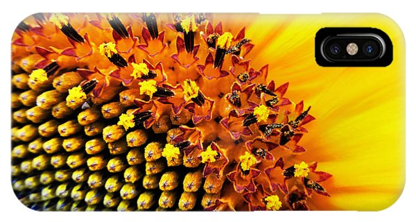 Sunflower Seeds iPhone Case - Stars Of The Sun by Marianna Mills