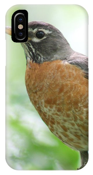 Stately Robin IPhone Case