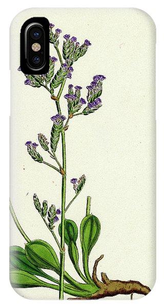 Lavender iPhone Case - Statice Binervosa Var. Dodartii Lesser Sea-lavender Var by English School