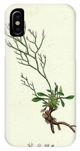 Lavender iPhone Case - Statice Caspia Matted Sea-lavender by English School