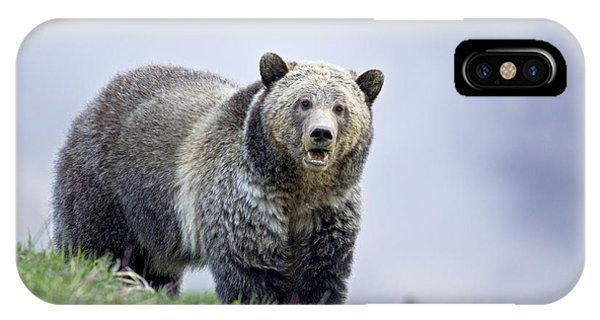 Steamboat Grizzly IPhone Case