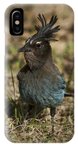 Stellar's Jay - Inland Race IPhone Case
