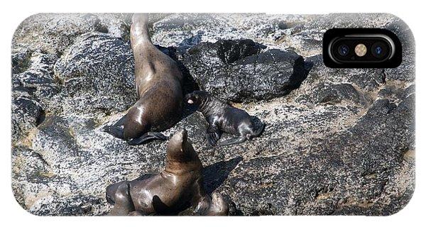 Steller Sea Lion - 0033 IPhone Case