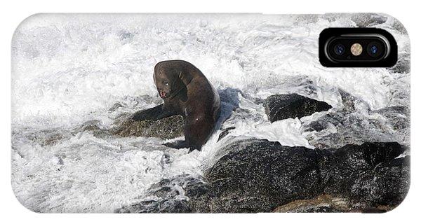 Steller Sea Lion - 0035 IPhone Case