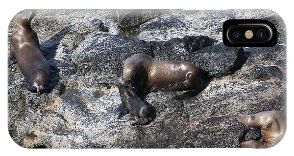 Steller Sea Lion - 0042 IPhone Case