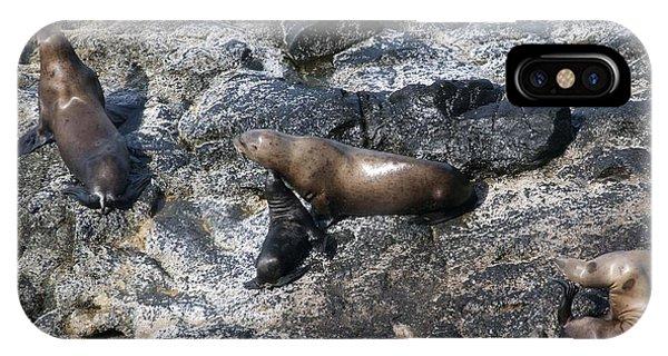 Steller Sea Lion - 0043 IPhone Case