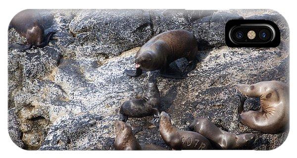 Steller Sea Lion - 0044 IPhone Case