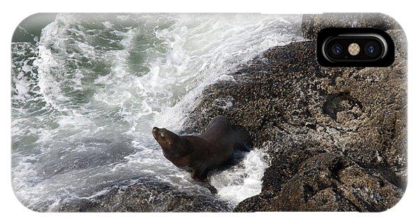 Steller Sea Lion - 0045 IPhone Case