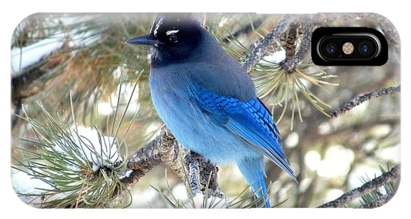 Steller's Jay Profile IPhone Case