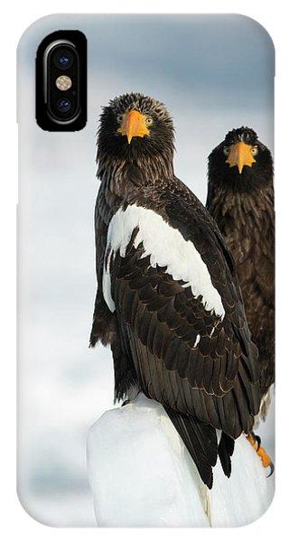 Behaviour iPhone Case - Steller's Sea Eagles by Dr P. Marazzi