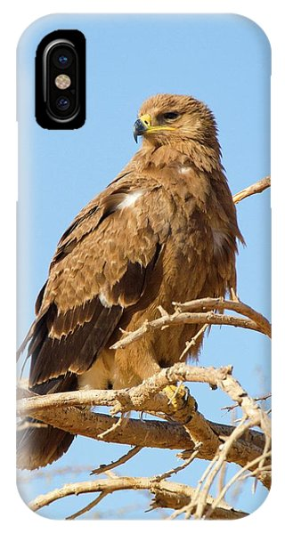 Steppe Eagle (aquila Nipalensis) Phone Case by Photostock-israel
