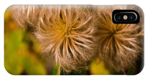 Steroid Dandelion IPhone Case