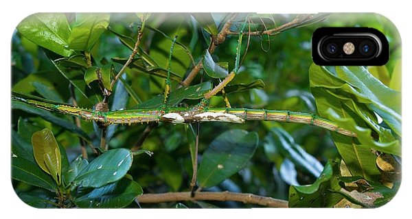Stick Insect Phone Case by Philippe Psaila/science Photo Library